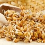 Пророщенные семена злаков — здоровье от природы! Способы проращивания и рецепты из проростков